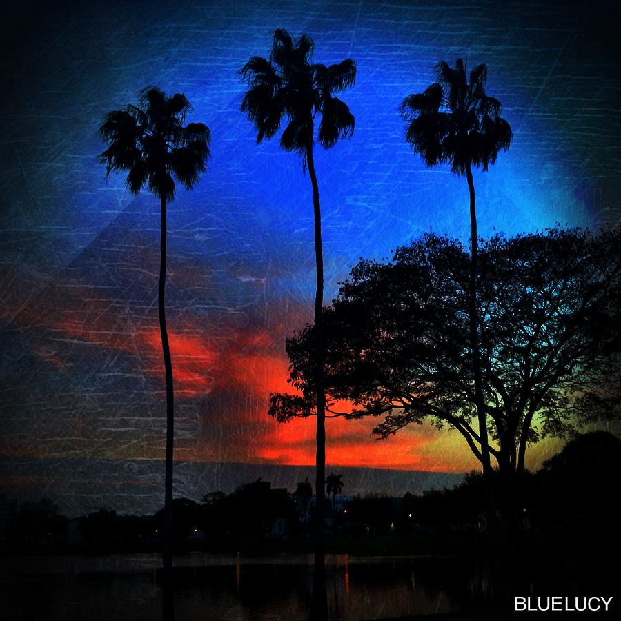 Palms_Bluelucy