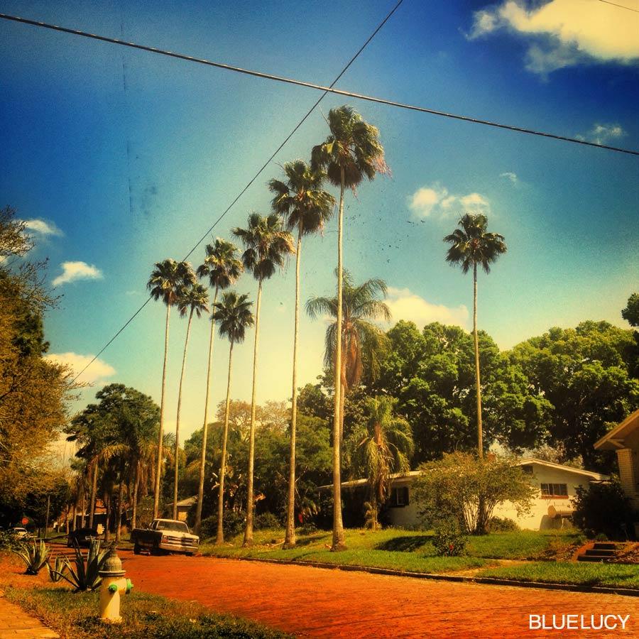 LOVE_FLORIDA_BLUELUCY_CHAD_MIZE