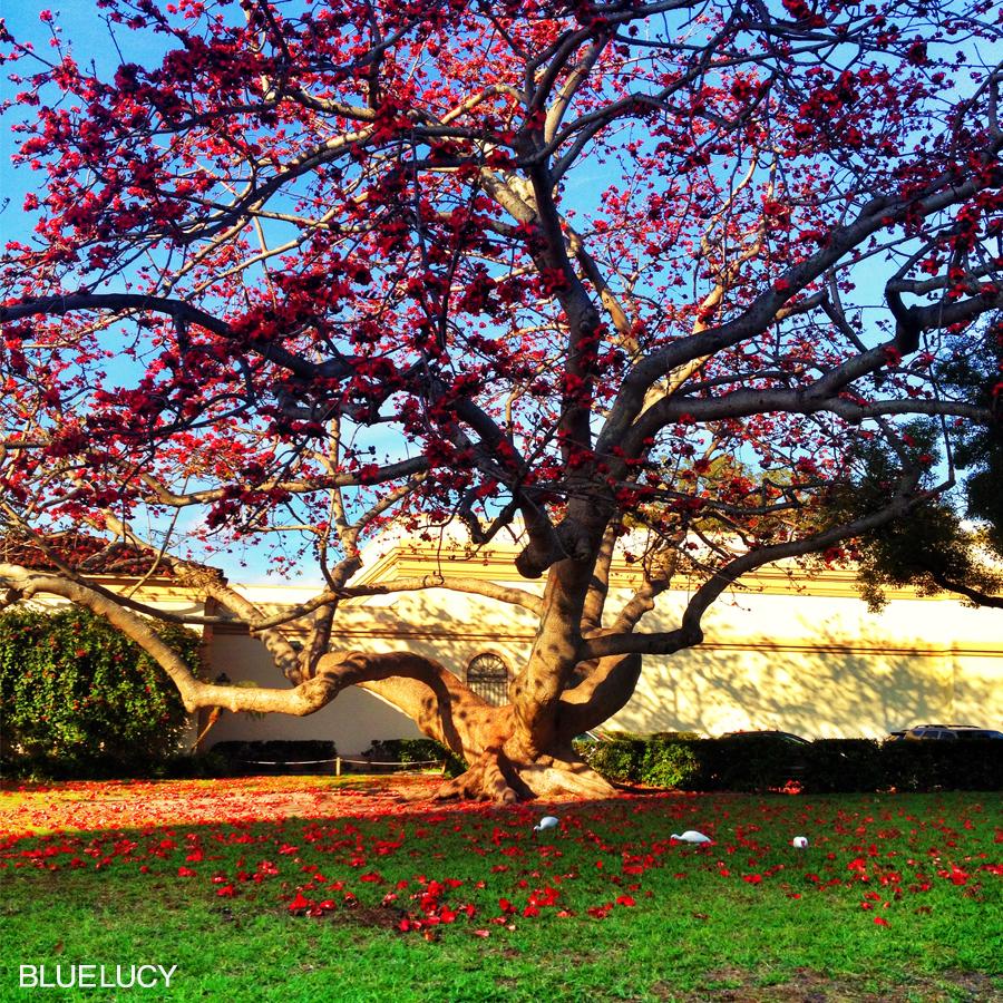Tree_Bluelucy
